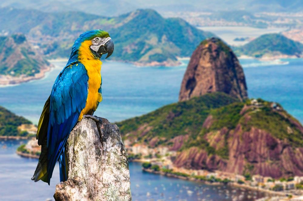 Екскурзия Екскурзия до Аржентина и Бразилия - пътуване в ритъма на Южна Америка - 13 дни / 10 нощувки: 4 в БУЕНОС АЙРЕС,  2 в ИГУАСУ,  4 в РИО ДЕ ЖАНЕЙРО