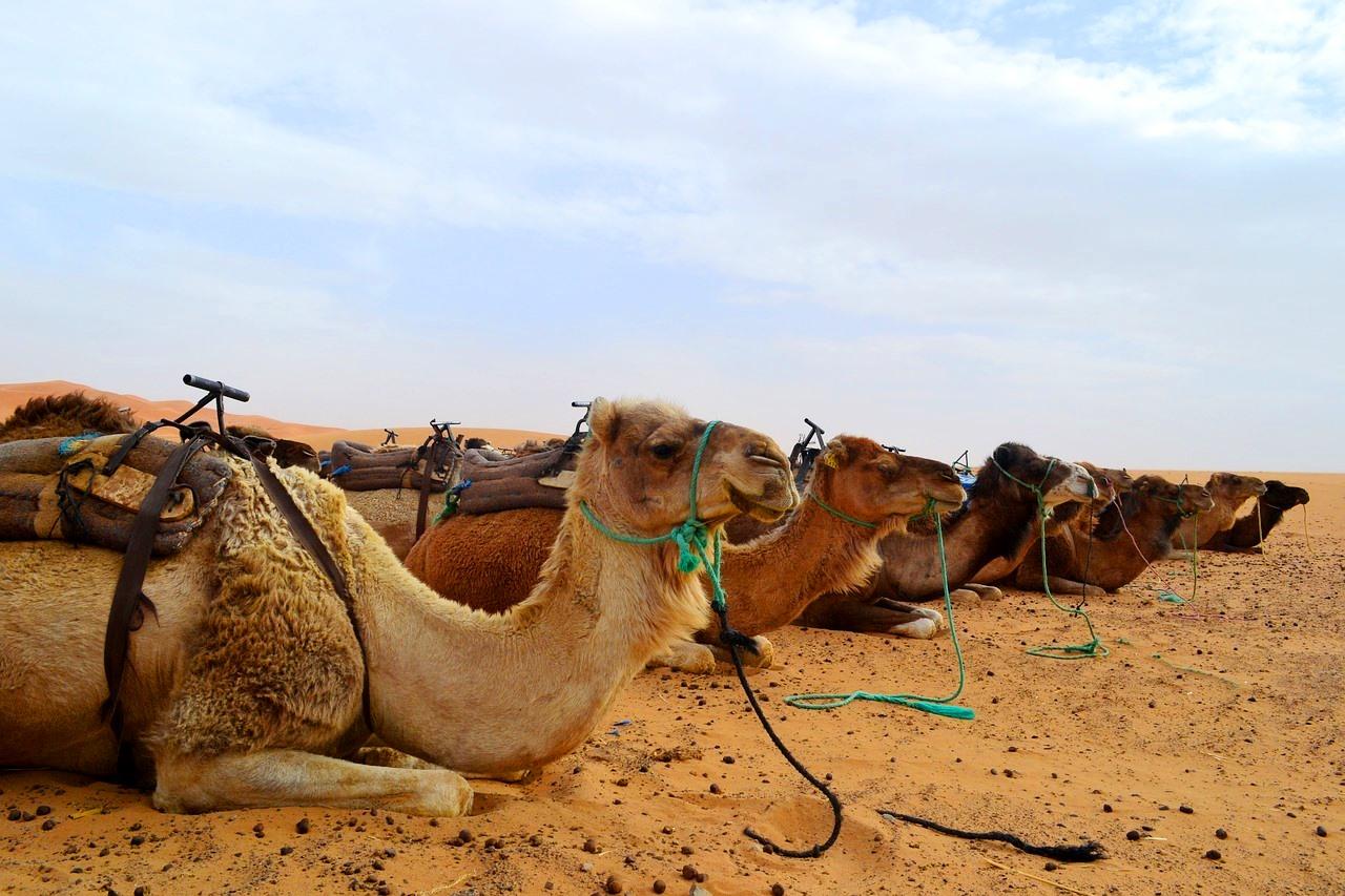 пътуване до мароко и маракеш